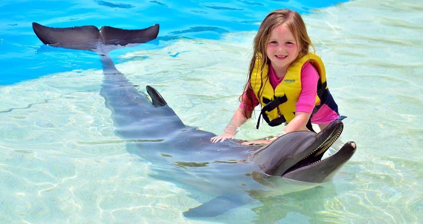 Общение с дельфинами из Ичмелера