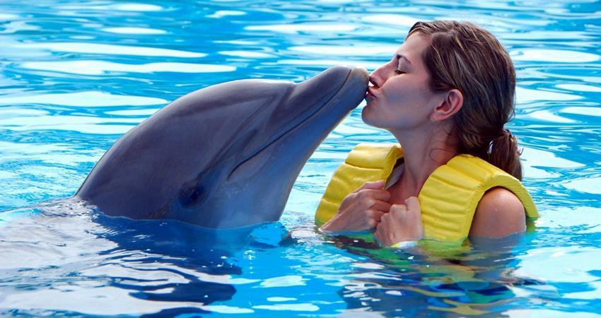 Плавание с дельфином из Ичмелера